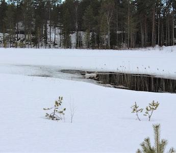 Vårtecken i Storsund